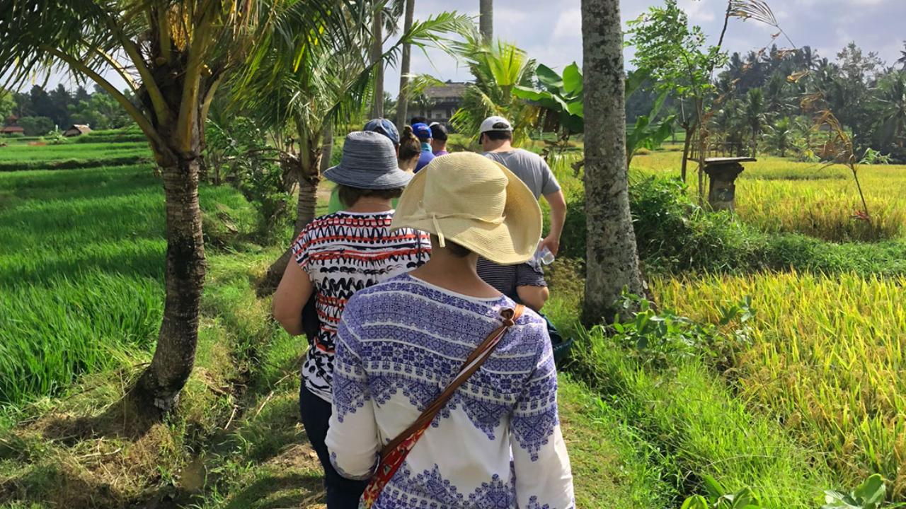 Walk in the rice fields